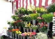 Florist Insurance Roseville, Folsom, Granite Bay, CA